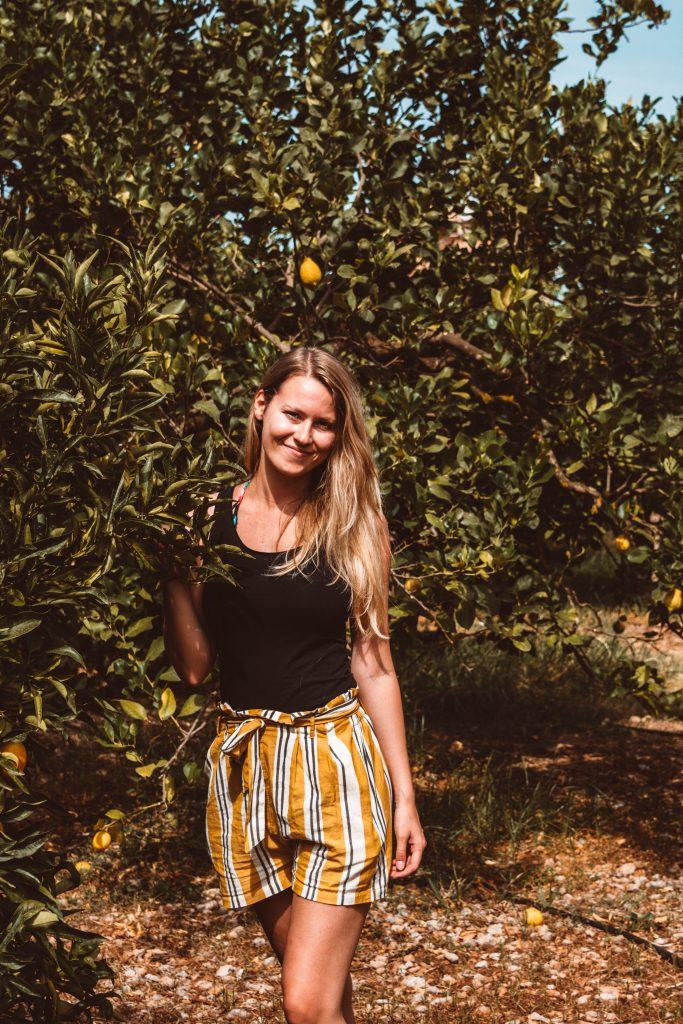 Orangenplantagen in Soller