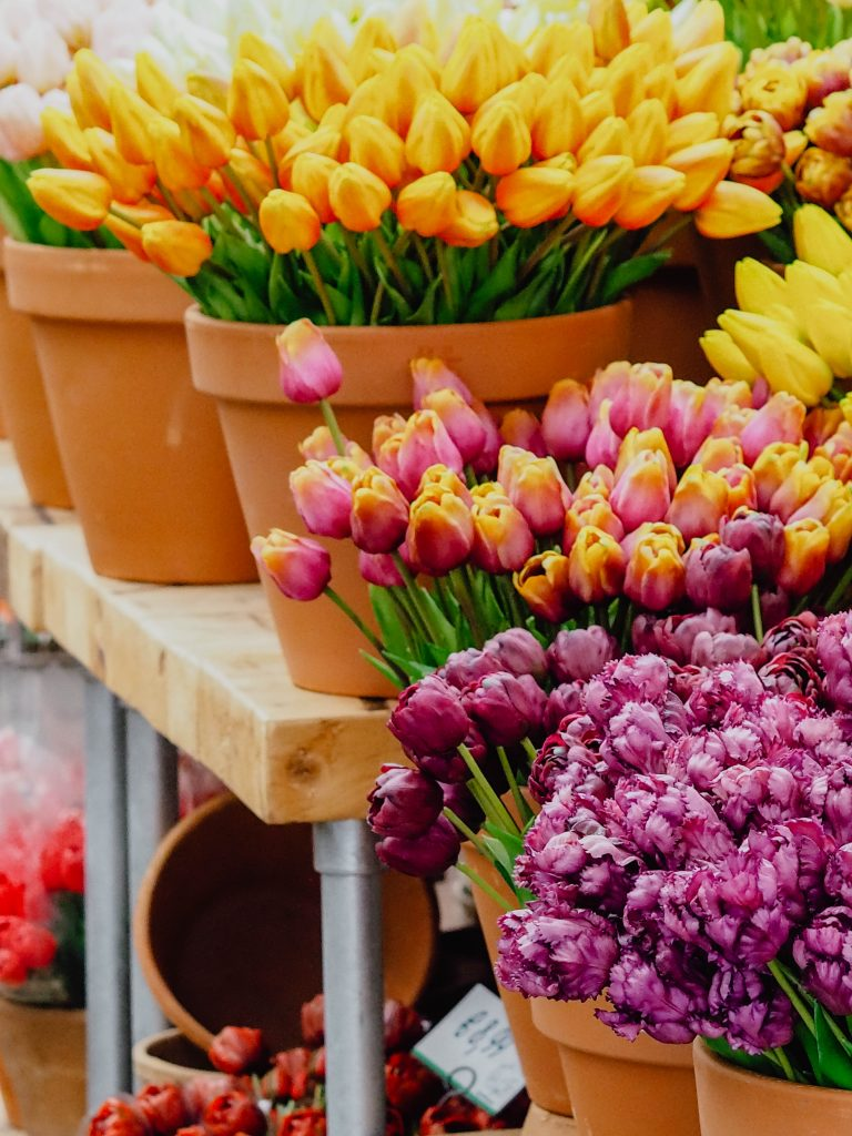 Tulpen am Blumenmarkt in Amsterdam